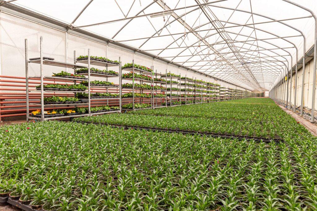 Kertészeti üzemek megújításának támogatása (VP2-4.1.3.5-21)